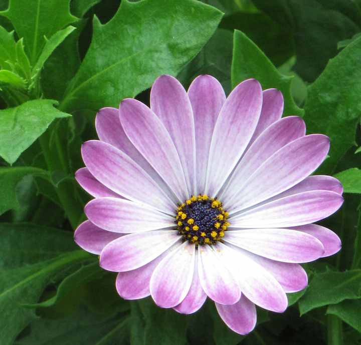 photo of light purple flower
