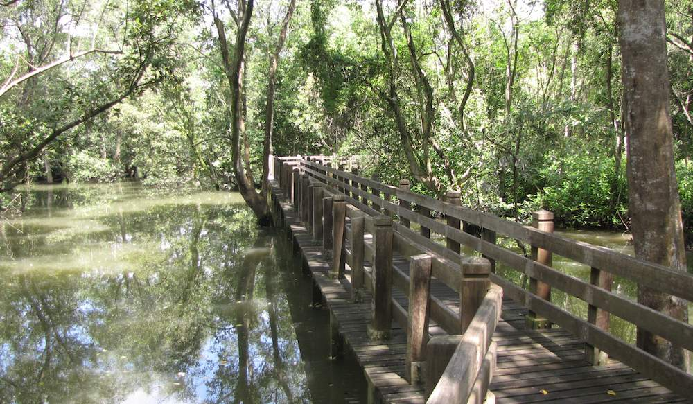 Mangrove swamp and walkway