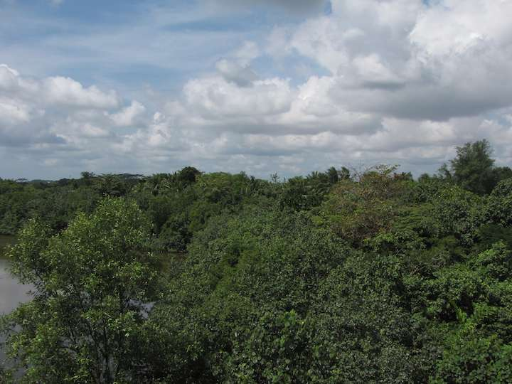 View from tower at the Sungei Buhlu Nature Park, Singapore