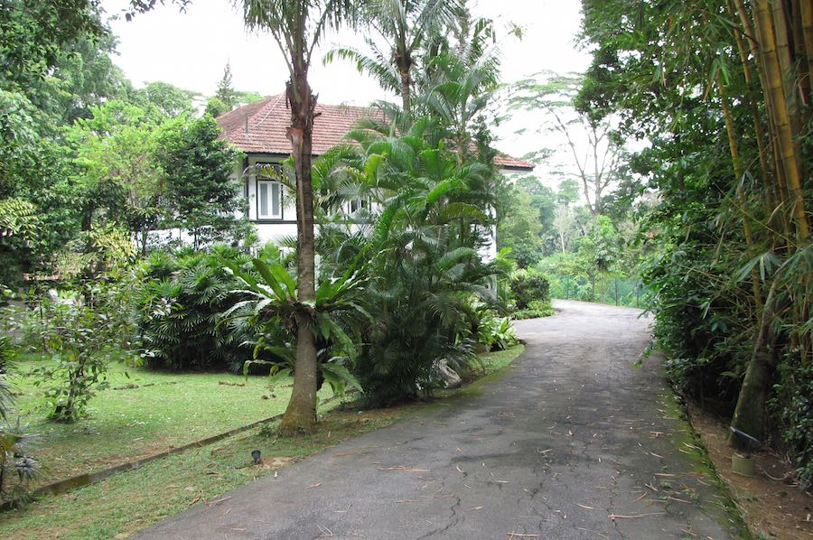 photo of a driveway leading to a house with many plants in the yard